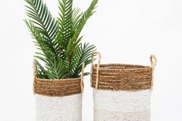 הכלים הכי יפים לצמחים שלכם!